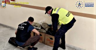 Drug, Finance Guard intercepts 143 kilos of marijuana at the port of Civitavecchia: an arrest