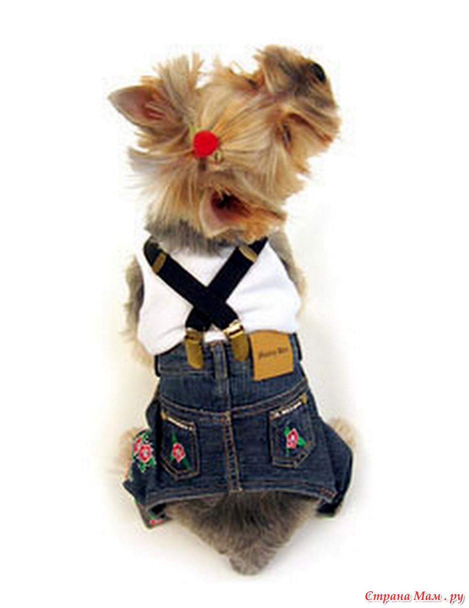 Джинсы для собаки + выкройка - Гардероб для наших любимых питомцев (собак, кошек) - Страна Мам