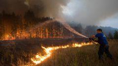 چگونه برای نجات جنگل از آتش سوزی