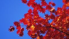 چرا برگ ها خجالت می کشند