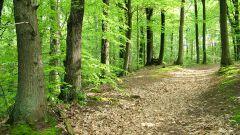 چگونه از جنگل خارج شویم