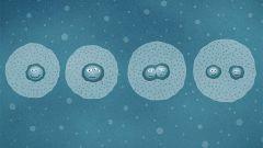 Come si riproducono gli organismi vivi