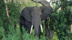 Dove gli elefanti vivono
