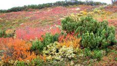 Растения и животные тундры животные и растения тундры ...