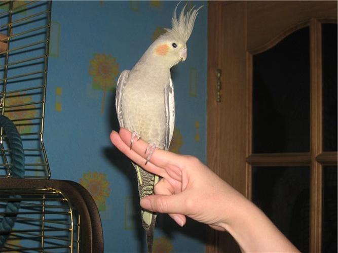 pierderea în greutate a papagalului