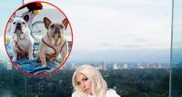 Lady Gaga happily reunited with her two French bulldogs after she promised half a million dollars for their safe return