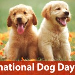International Dog Day 2020 Funny Memes Quotes Cute Gifs Adorable Puppy Hd Images Viral Videos Messages And Wishes To Celebrate The Day Dedicated To Canines Latestly