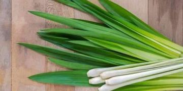 Lemongrass: health benefits of lemongrass, lemongrass to lose weight
