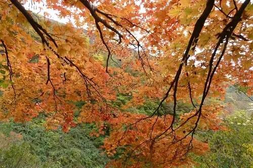 横山岳 登山 紅葉