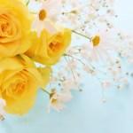 父の日に花のプレゼントは嬉しいもの?おすすめの花の種類と選び方