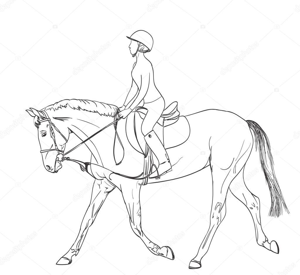 Horse Rider Line Art Drawing Equestrian Sport Training