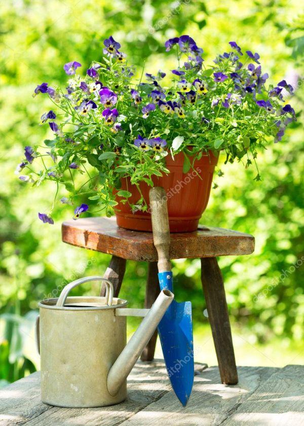 Летние цветы с инструментами в саду — Стоковое фото ...