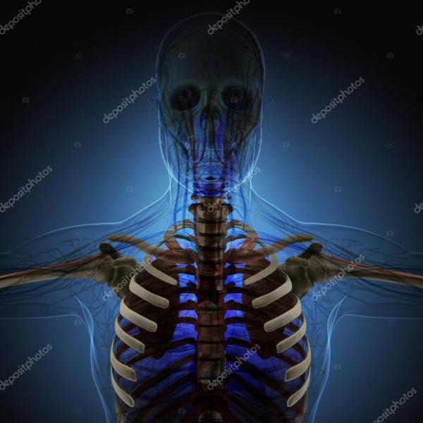 Человеческое тело (органы) с помощью рентгеновских лучей ...