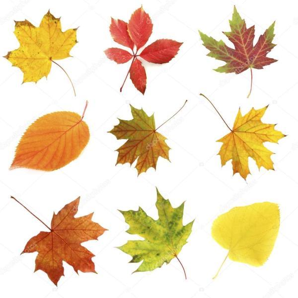 Фото: листьев золотая осень   Картинки листья осень ...
