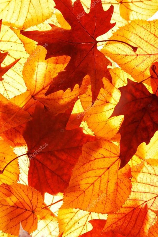 Золотая осень листья — Стоковое фото © belchonock #93815360