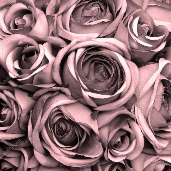 Fundo rosas — Stock Photo © Malgorzata_Kistryn #69608461