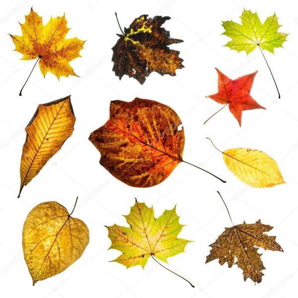 Красочные осенние листья микс — Стоковое фото ...