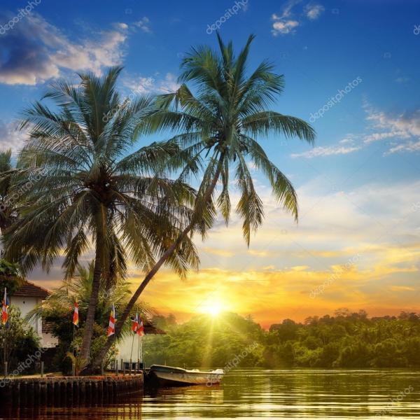 Река, Красивый рассвет и тропические пальмы — Стоковое ...