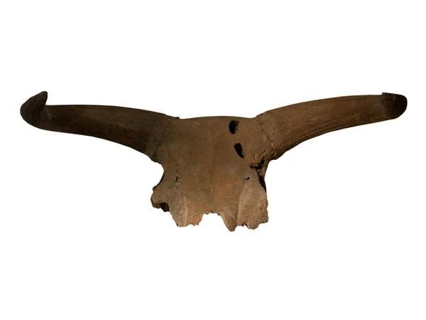 Ископаемые древние рептилии в скале — Стоковое фото ...