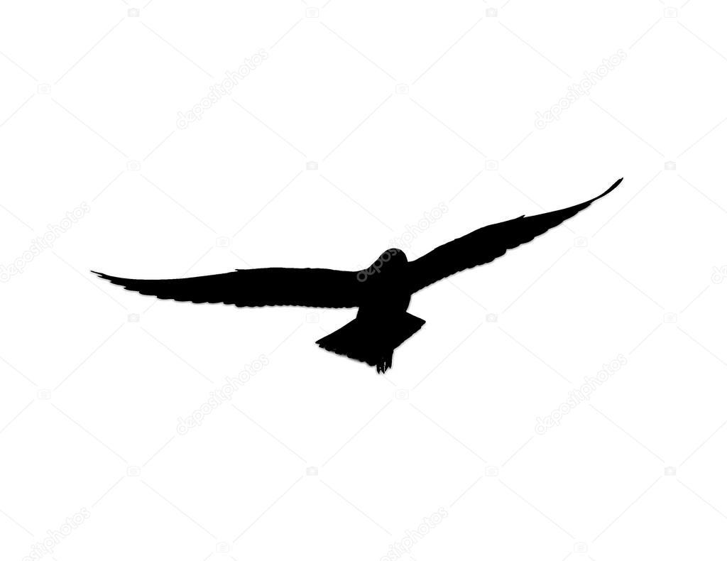 Silueta De Gaviota Volando