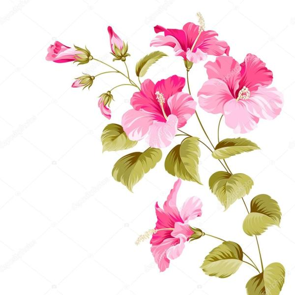 Цветок гибискуса Векторное изображение 169 Kotkoa 65392975