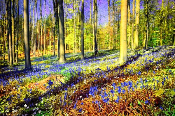 Весенний лес, покрытые колокольчики — Стоковое фото ...