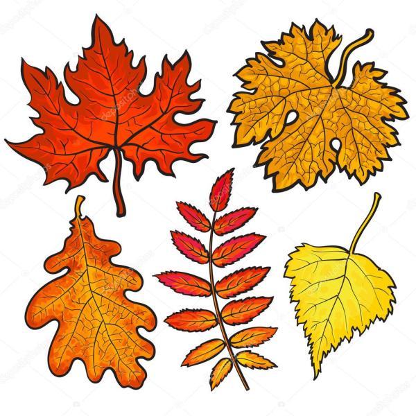 Картинки: осенние листья. Набор осенние листья - клен ...