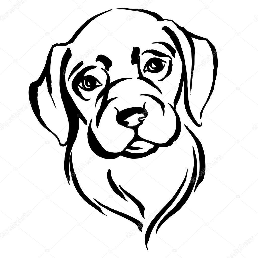 Labrador In Cartoon