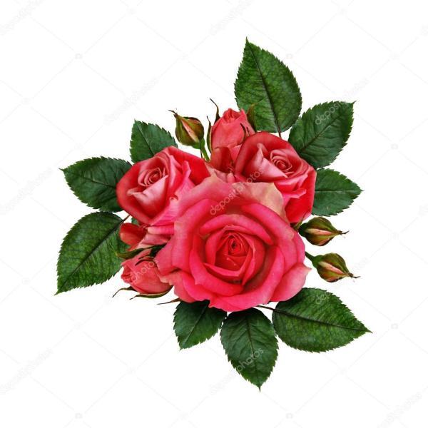 květy růže — Stock Fotografie © ksushsh #53644927