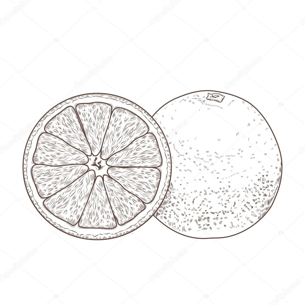 Sliced Orange Fruits Isolated On A White Background Hand