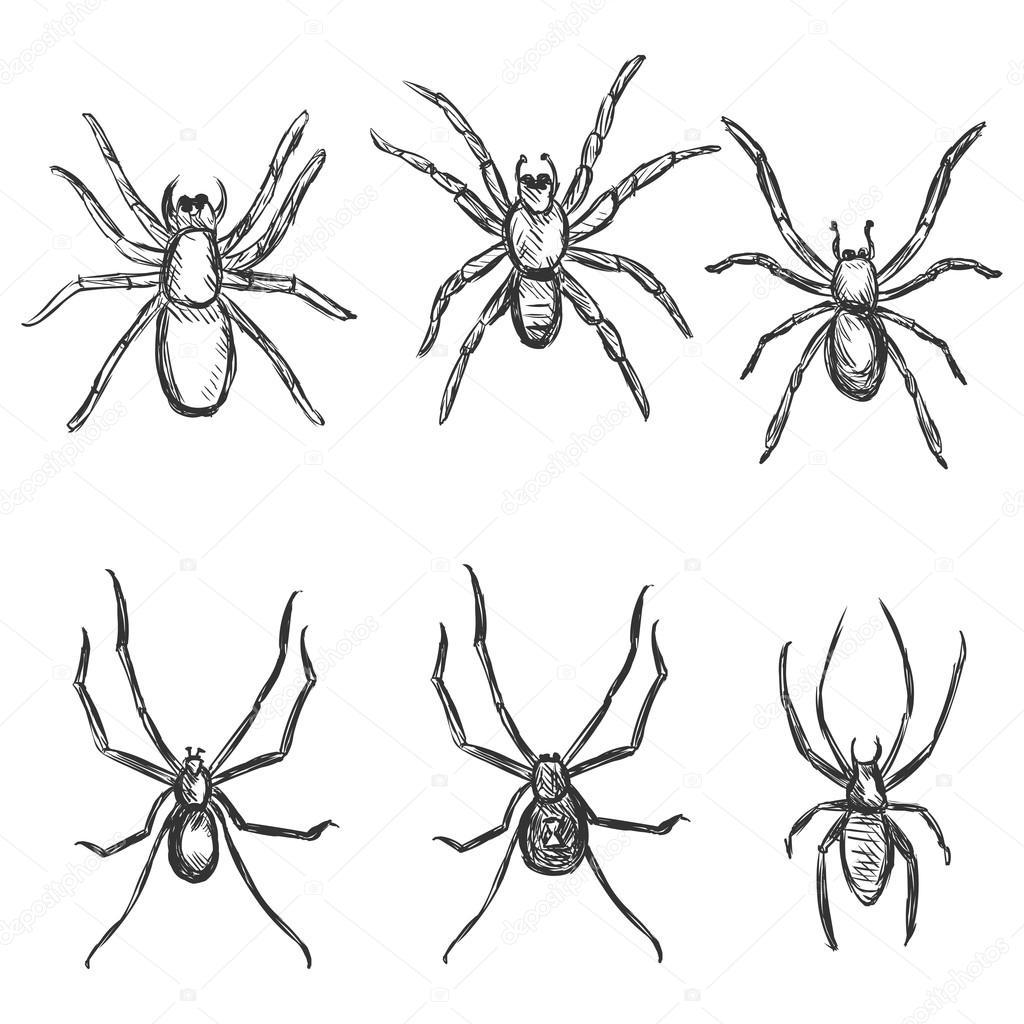 Skizze Spinnen