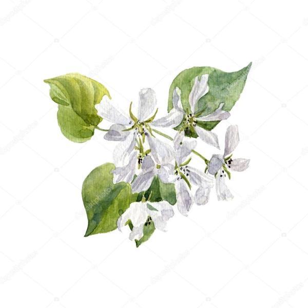 Акварель яблоко дерево цветы — Стоковое фото © cat_arch ...