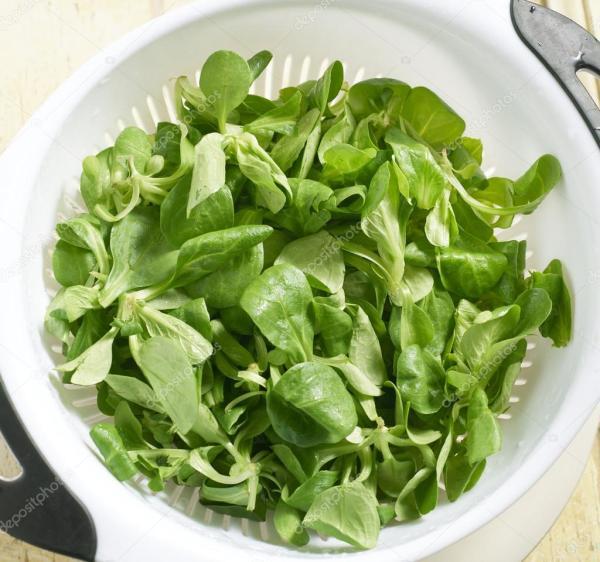 Свежие листья одуванчика салата в дуршлаг — Стоковое фото ...