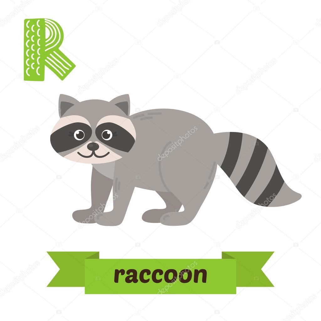 Raccoon R Letter Cute Children Animal Alphabet In Vector Funn