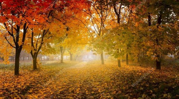 Золотая осень в солнечном лесу, естественный фон ...