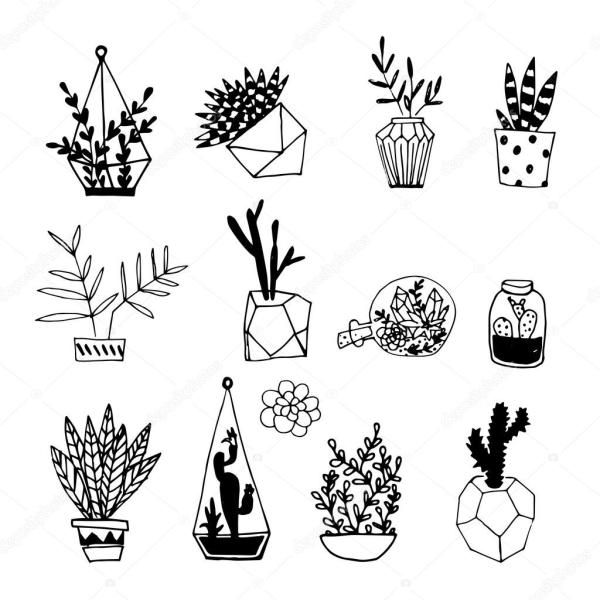 Black and white cactus and succulents. — Stock Vector ...