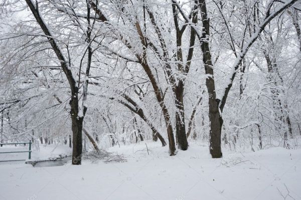 Снежный пейзаж в парке. Высокое разрешение и красивые ...