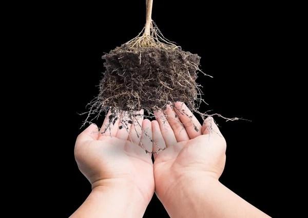 Ручной и корневой завод с соей, концепция безопасной земли ...