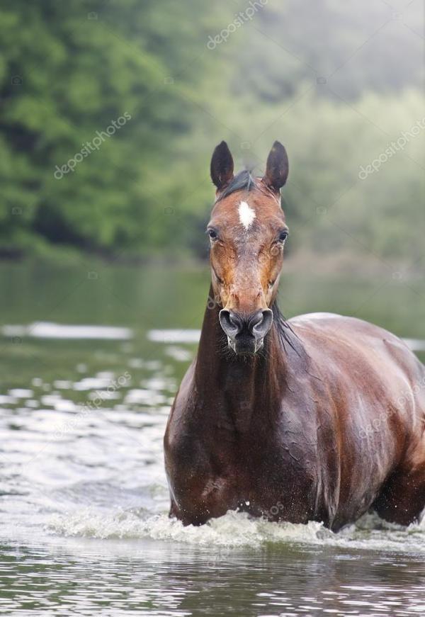Фото: породистые лошади. Красивые породистые лошади ...