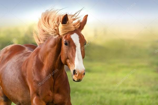 Лошадь портрет в движении — Стоковое фото © callipso_art ...