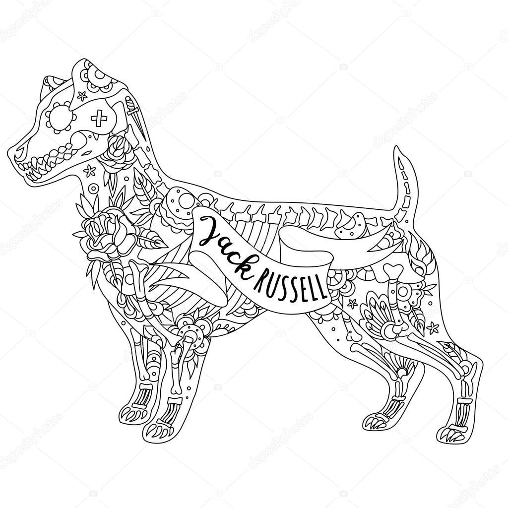 Jack Russell Piu Terrier