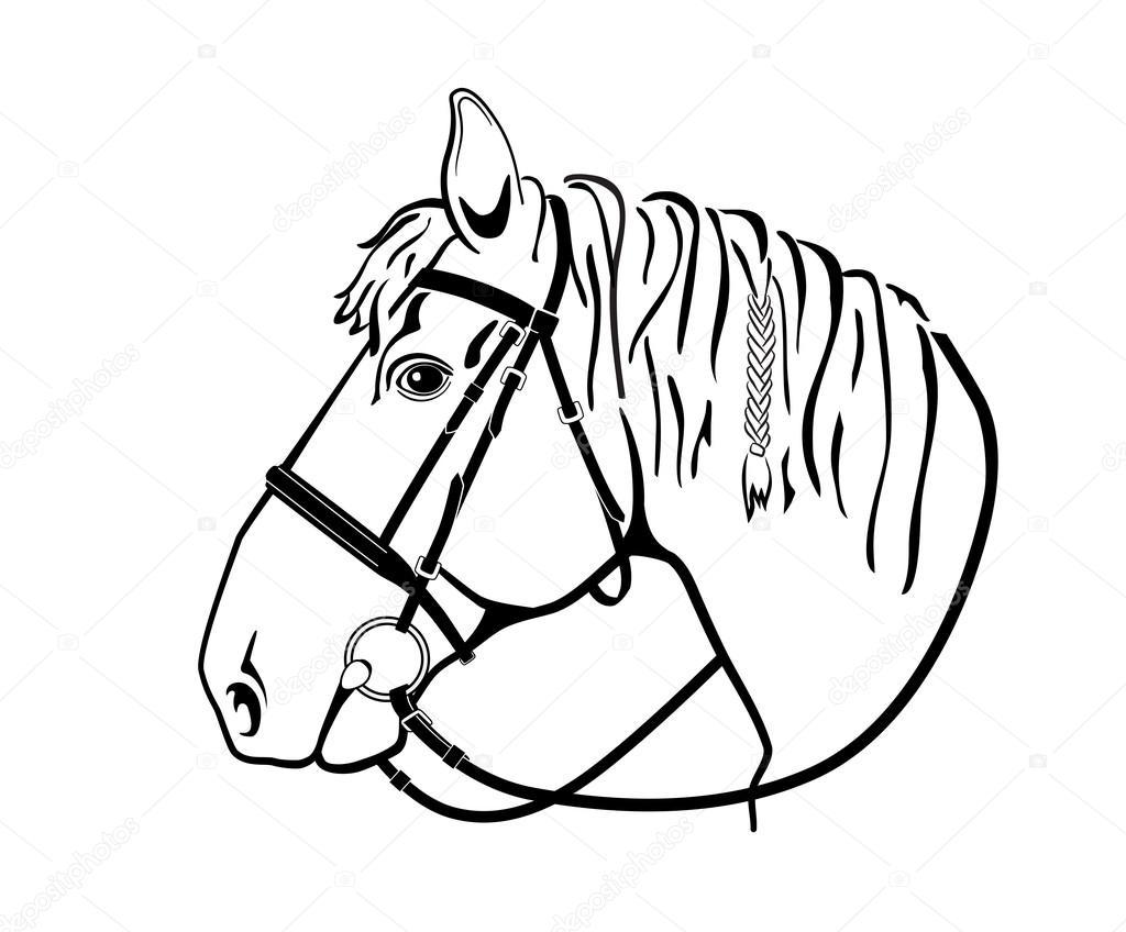 Paard Hoofd In Harnas Zwart Wit Tekening