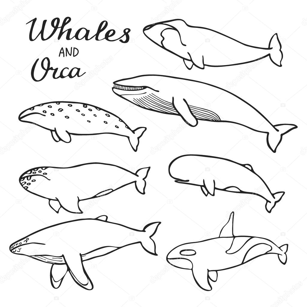 Whales And Orca Set Hand Drawn Cartoon Collection Of Sea