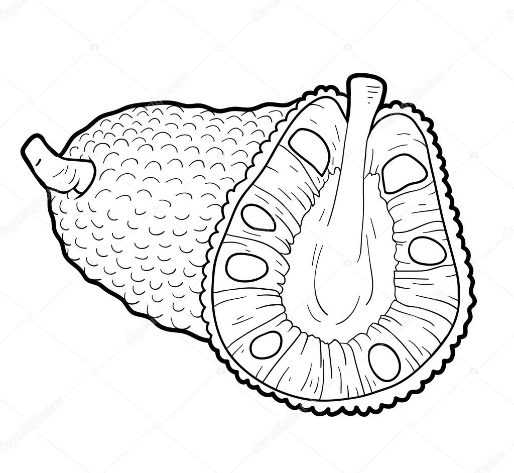 Pictures Jackfruit For Coloring