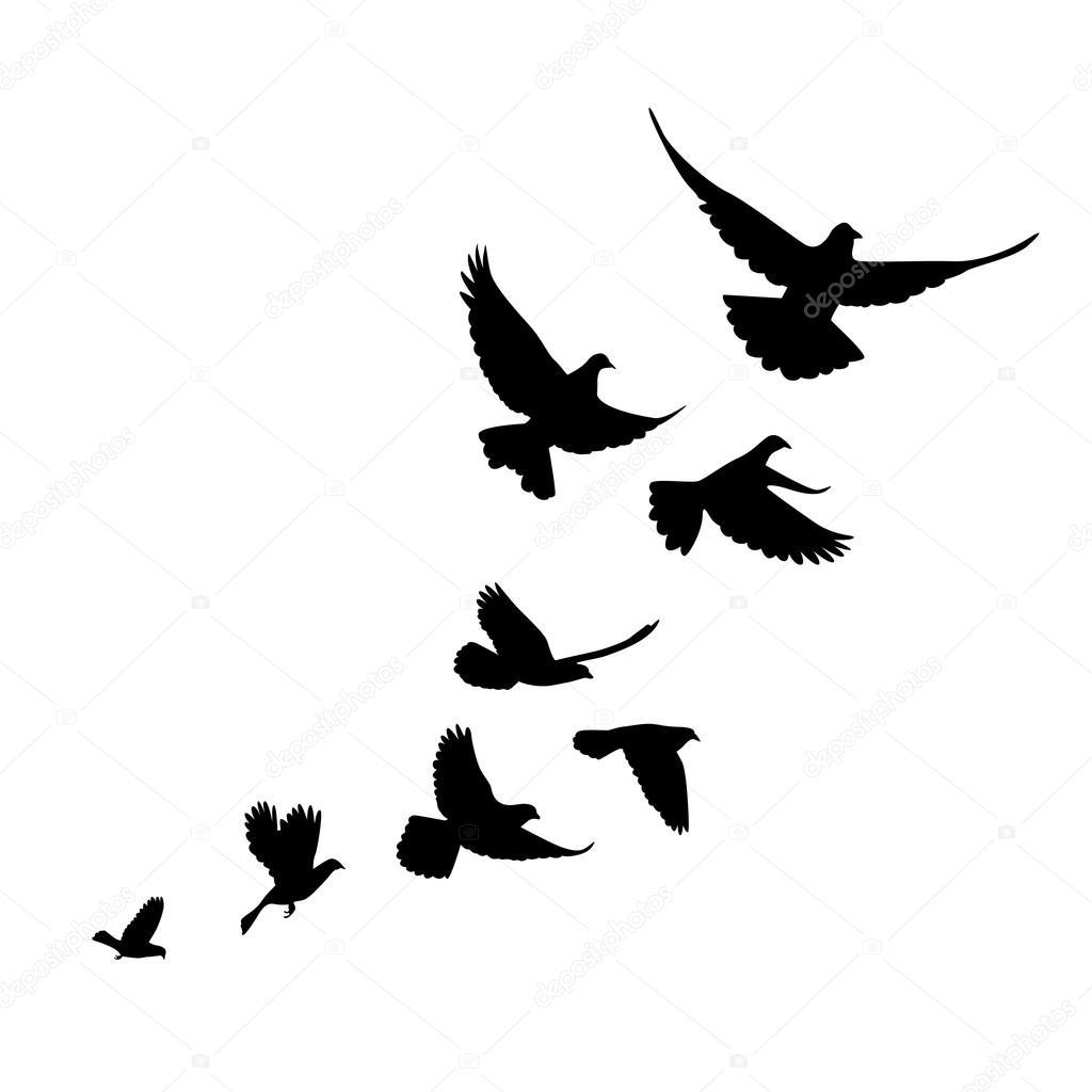 Subir Una Bandada De Aves Palomas Silueta Negra Sobre