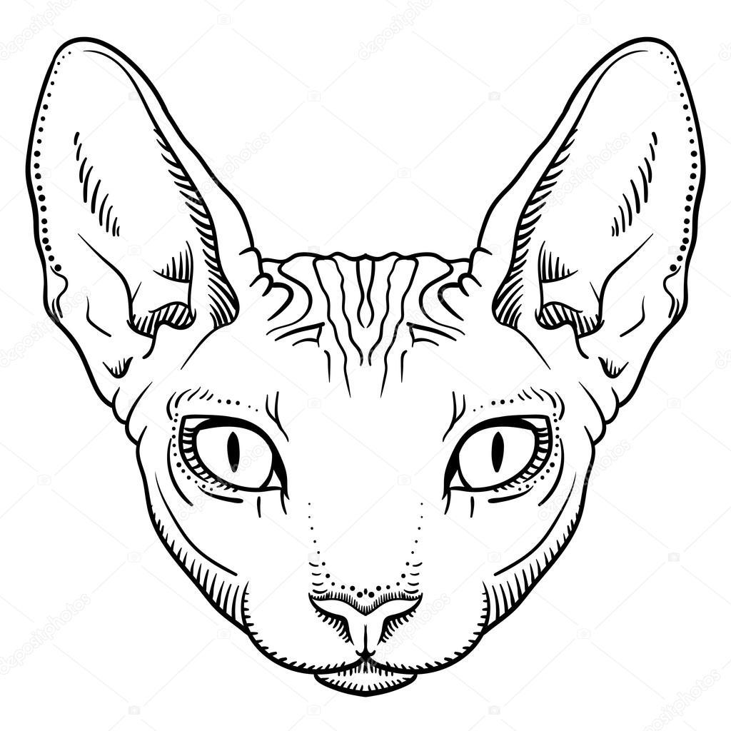 A Bald Cat