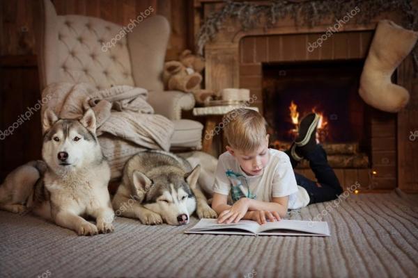 Мальчик, почитать книгу у камина рядом собак хаски ...
