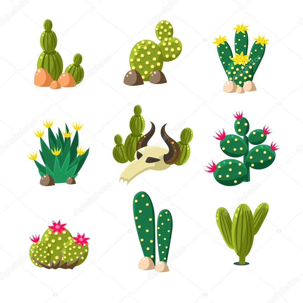 Diferentes Tipos De Plantas De Cactus