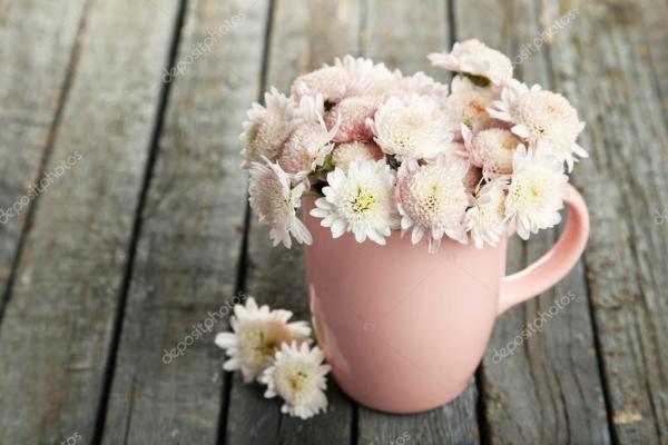 Красивые хризантемы в чашке — Стоковое фото © 5seconds ...