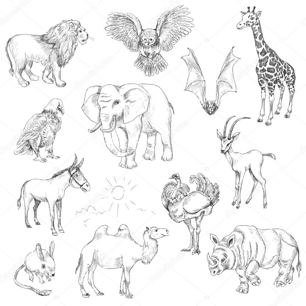 Imagenes Animales Del Desierto
